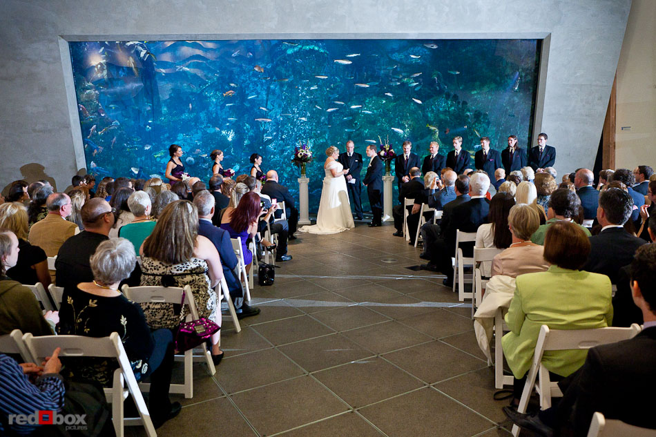 Mary And Nick Exchange Wedding Vows During Their Ceremony At The Seattle Aquarium