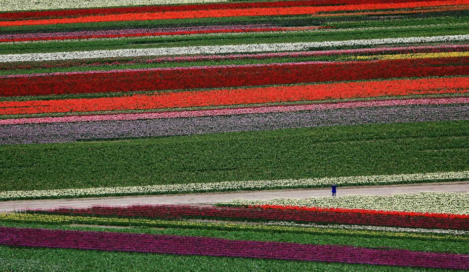 Nature -  Tulip Town, Mt Vernon, WA (Photography by Dan DeLong /