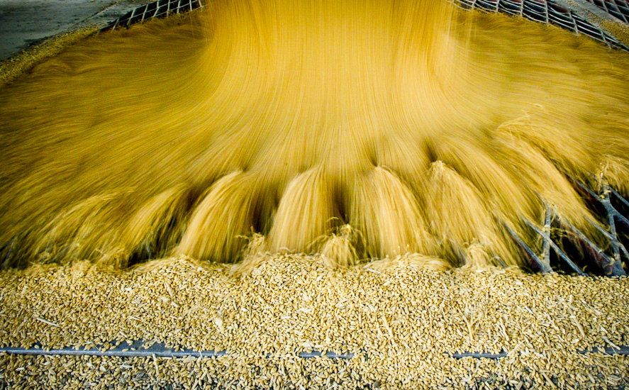 Industrial Photography-Winter Wheat